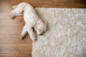 Tips for Choosing the Perfect Area Rug